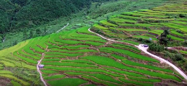 有机水稻种植基地2