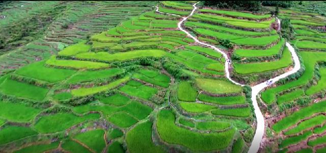 有机水稻种植基地3