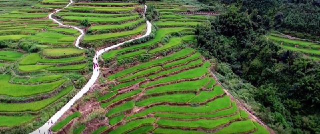 有机水稻种植基地1